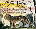 William Blake's 'Tiger Tiger Burning Bright'